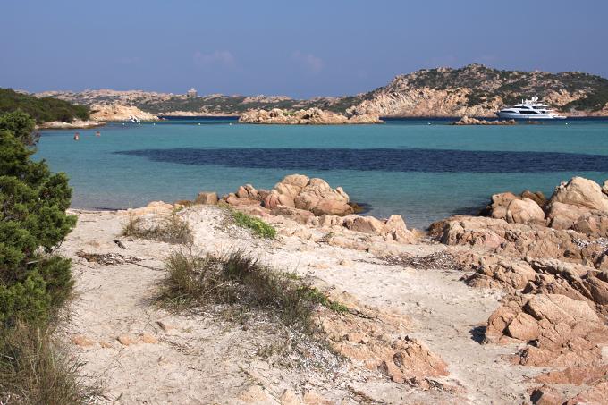 Pancraticum maritimum - lokalita Sardinie