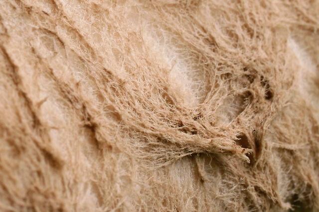 Macrolepiota procera (bedla vysoká)