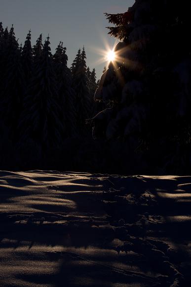 Vzhůru do zimy