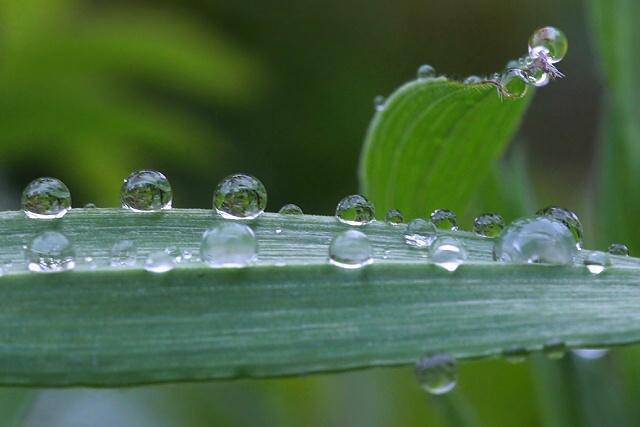 Belušské kapky deště