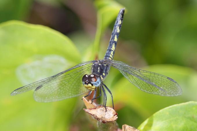 Mauritius - fauna