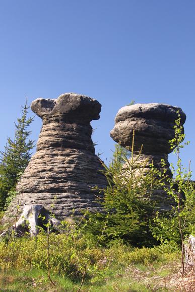 Broumovské stěny - skalní hřiby