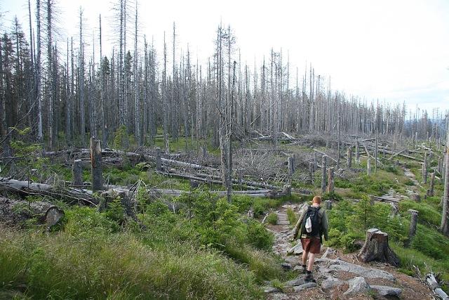 Les u Trojmezné hory - Šumava
