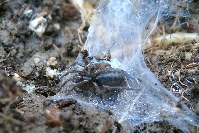 Pavoučí ložnice v zimě