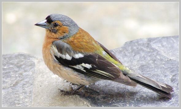 http://fotoblog.in/galerie/albums/ptaci-aves/6838701.jpg