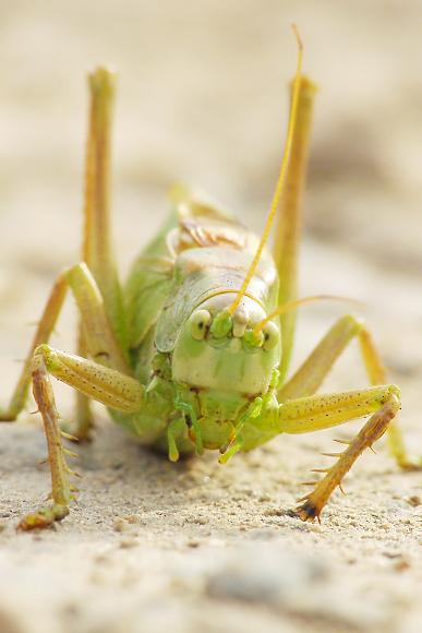Kobylka a vzpomínky