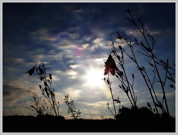 http://fotoblog.in/galerie/albums/uvahy-a-nezarazene/2360404.jpg