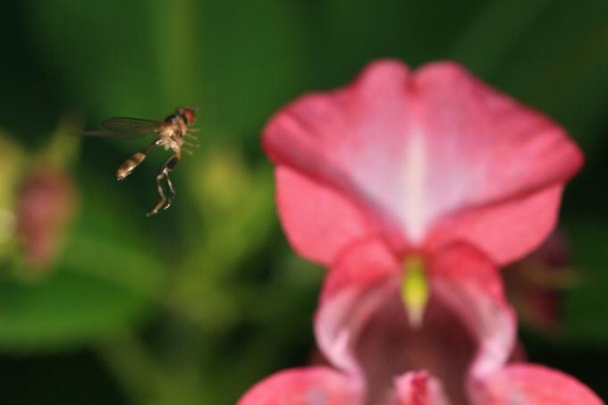 Příběh vyzáblé mouchy