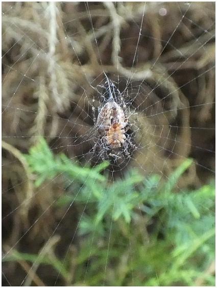pavouk-2.JPG