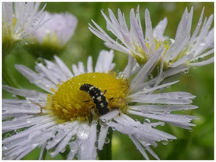 neurceny-hmyz.JPG