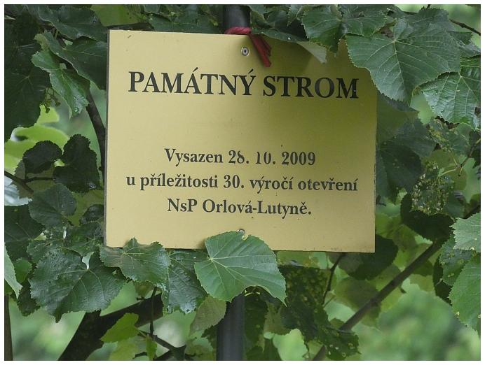 pamatny-strom-1.JPG