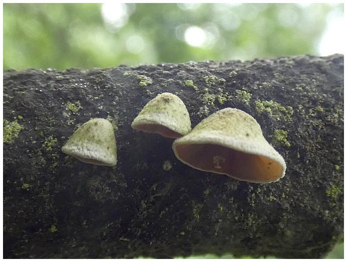 drevokazna-houba-97.jpg